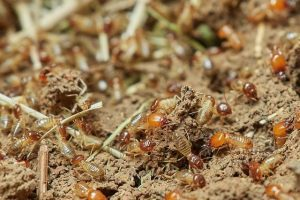 Termite inspectors in Milwaukee, WI